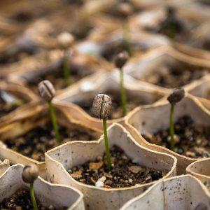 Seed 100g